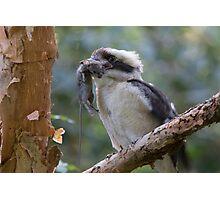 Kookaburra World Photographic Print
