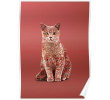 Funny Persian Cat Poster