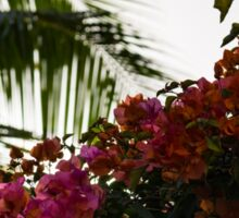 Dreaming of Tropical Gardens - Bougainvilleas and Palm Trees Sticker