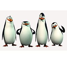 pinguin Photographic Print