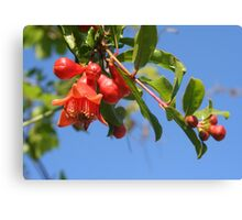 Pomegranate Flowers And Blue Skies Canvas Print