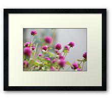 """Paper Pinks"" Framed Print"