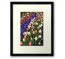 Colorful spring garden Framed Print