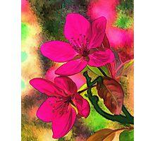 Flowers pink rosa orange Photographic Print