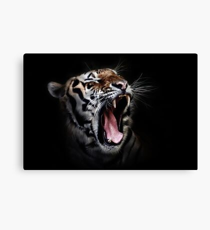 Tiger Animals Black and White Canvas Print