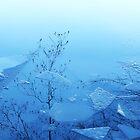 Reflection........ Icy Lake..........Berlin by Imi Koetz