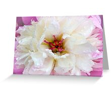 Pearly Peony Greeting Card