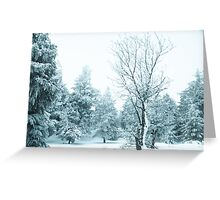 Snow and frost covered pine trees Greeting Card