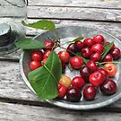 Cherries on a Plate by Christine Wilson