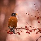 Robin In A Berry Tree 2014-1 by Thomas Young