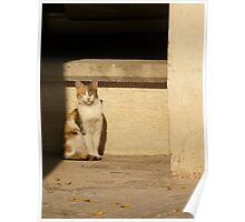 Stray Cat Poster