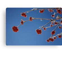 Mountain Ash Canvas Print