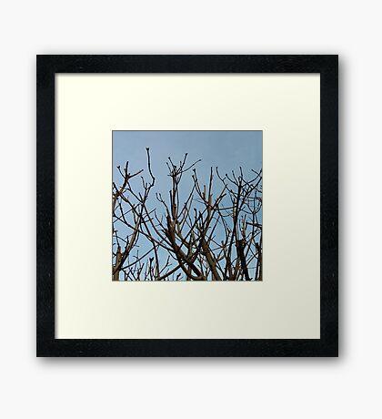 Trees on blue Framed Print
