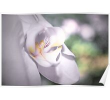 Soft Orchid Macro Poster