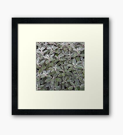 Leaves of grey Framed Print