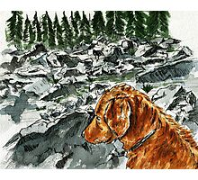 Mountain Dog Photographic Print
