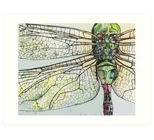 Dragon Fly wings Art Print