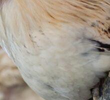 Roosting Hen Sticker