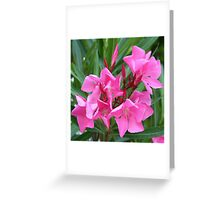 Pink Oleander Bouquet Closeup Greeting Card