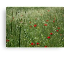 Seed Head With A Beautiful Blur of Poppies Background  Canvas Print