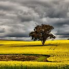 Light on the Canola - Coolah NSW Australia by Bev Woodman