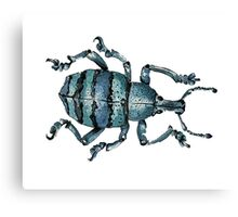 Blue Insect Canvas Print