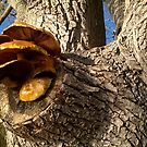 Tree mushrooms by Mike Cressy