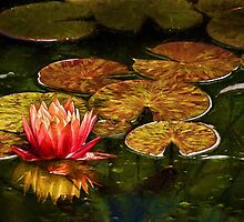 The artful lily by Celeste Mookherjee