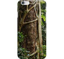Strangler fig along the World Heritage Walk iPhone Case/Skin