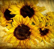 Vintage Sunflowers by wallarooimages