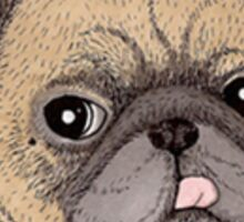 Pug Portrait Sticker
