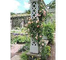 Peach & Green Trellis Photographic Print
