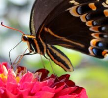 Butterfly On Red Flower Sticker