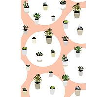 Succulents Repeat Pattern Photographic Print