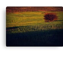 """The burning bush"" Canvas Print"