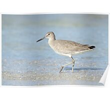 Winter Willet in Florida Poster