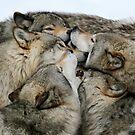 Muzzle nuzzle by Heather King