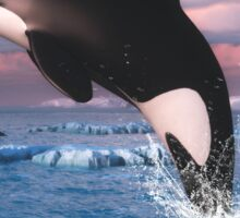 Killer Whales In The Arctic Ocean Sticker
