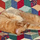 Cat Napping by Susan S. Kline