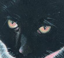 Kitty the stunning black and white cat Sticker