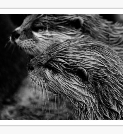 black and white otter Sticker