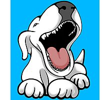 Laughing Bull Terrier Photographic Print