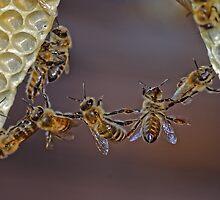 Beehive Secrets by Mark Bangert