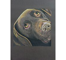 Podge the beautiful brown Labrador Photographic Print
