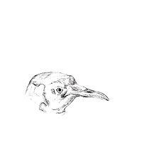 Emperor Penguin by Vilhjalmr