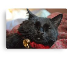 Sleeping Christmas Kitten Canvas Print