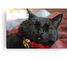 Sleeping Christmas Kitten Canvas Print