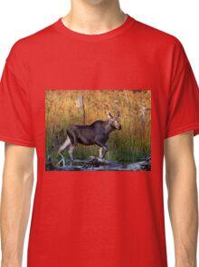 Maine Moose, yearling bull Classic T-Shirt