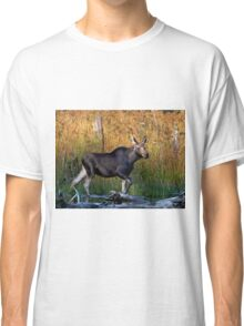 Maine Moose, yearling bull Classic T-Shirt