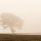 A Lone Tree In The Mist by Lynne Morris